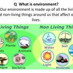 SHS Integrated Science - Diversity of living and non-living things 1